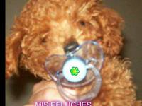 "CANICHES TOY ""MIS PELUCHES"" ZONA NORTE - Mascotas - General San Martín"
