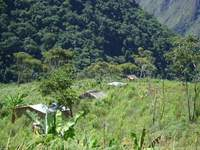 EN VENTA 30 HECTAREAS ZONA SUB TROPICAL NOR YUNGAS - Terrenos - Pedro Domingo Murillo