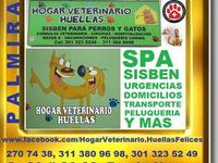Hogar Veterinario Huellas Felices - Animales en General - Palmira