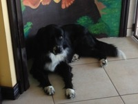 En Adopcion Hermoso Perro - Animales en General - Heredia