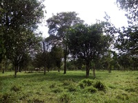 CHIRIQUI, BUGABA, TERRENO 5 HECTS. + 3262.22 Mts/2 TITULADAS - LAND 13.16 ACRES, TITLED - Terrenos - Bugaba