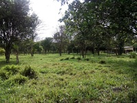 CHIRIQUI, BUGABA, LAND 13.16 ACRES, TITLED $200.000.00 - Terrenos - Bugaba