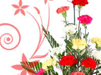 Exclusive Mother's Day special gifts - Otros Servicios - Albany