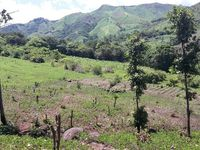 Land to coffe trees, agriculture, cattle raising   - Ranchos / Fincas / Granjas - Todo Estados Unidos